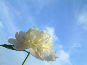 Contact The English Aromatherapist