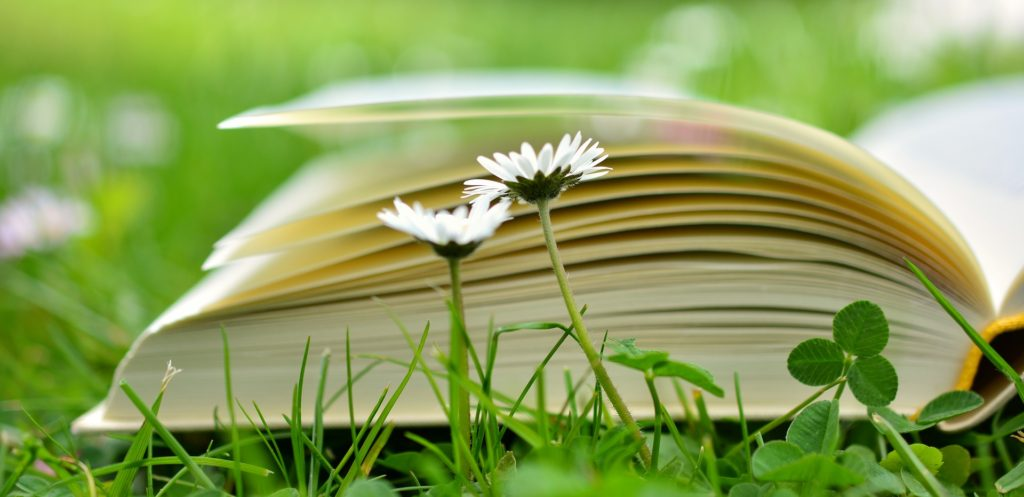What is the best aromatherapy book
